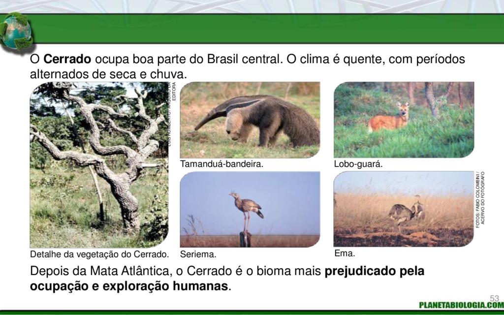 O Cerrado ocupa boa parte do Brasil central. O ...