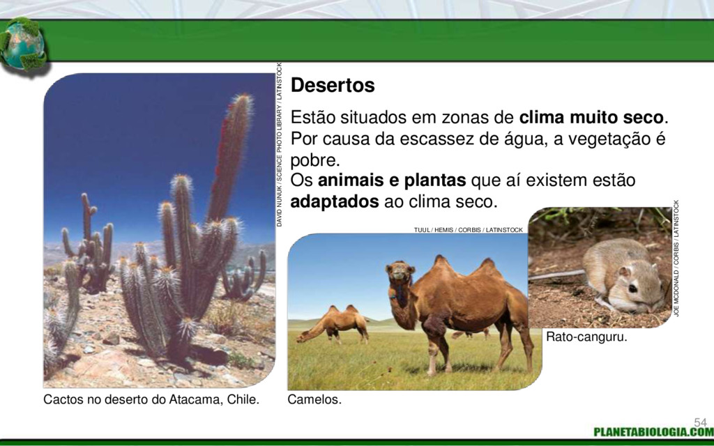 Desertos Cactos no deserto do Atacama, Chile. C...