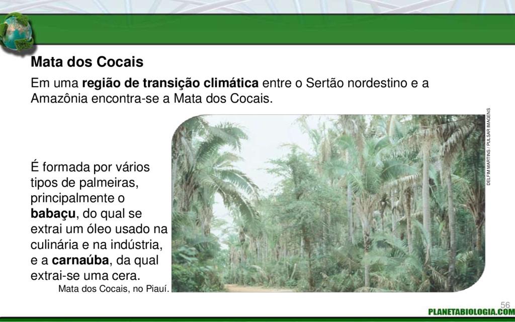 Mata dos Cocais Mata dos Cocais, no Piauí. É fo...