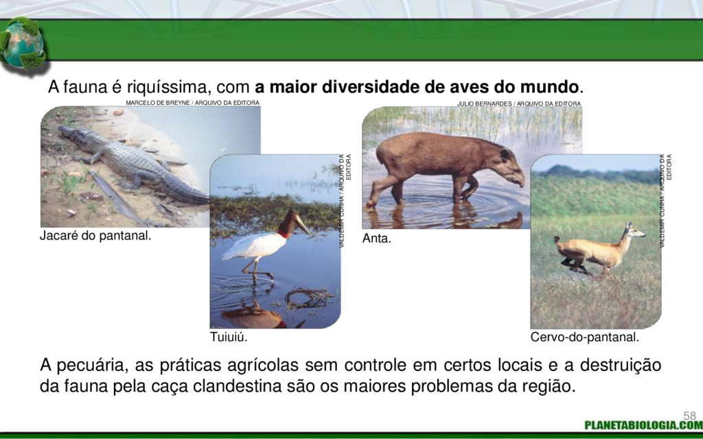 A fauna é riquíssima, com a maior diversidade d...