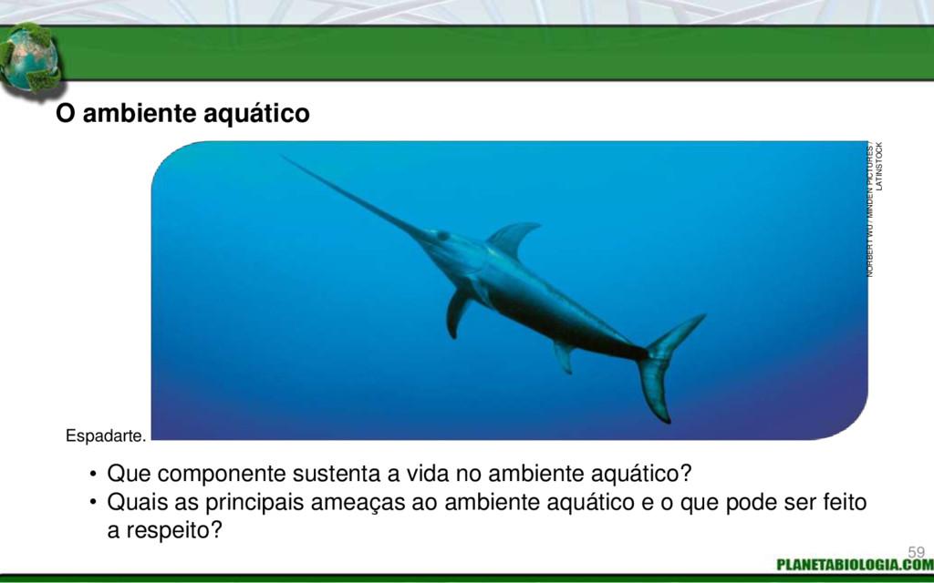 O ambiente aquático • Que componente sustenta a...