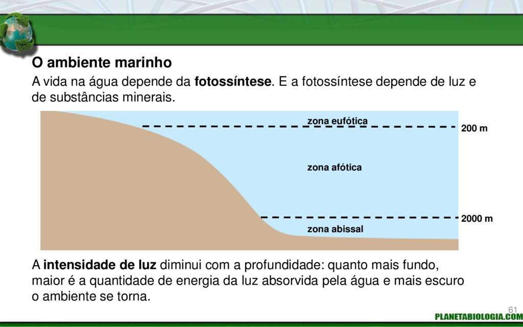 O ambiente marinho 200 m 2000 m zona eufótica z...