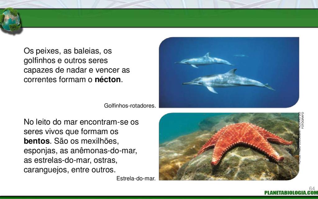 Os peixes, as baleias, os golfinhos e outros se...
