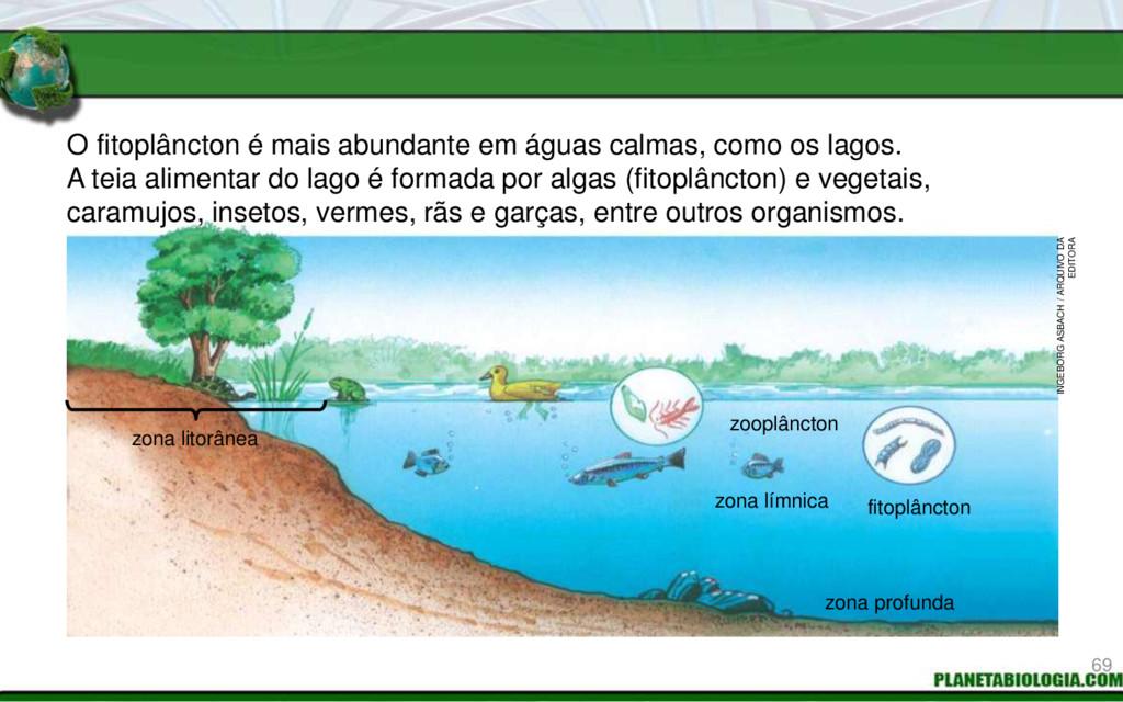 O fitoplâncton é mais abundante em águas calmas...