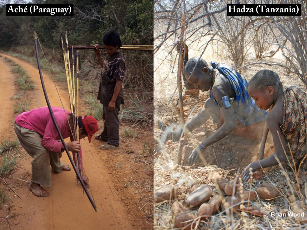 Aché (Paraguay) Hadza (Tanzania)
