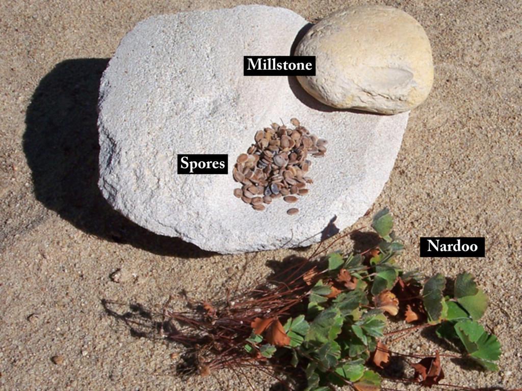 Nardoo Spores Millstone