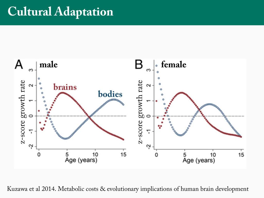 Kuzawa et al 2014. Metabolic costs & evolutiona...