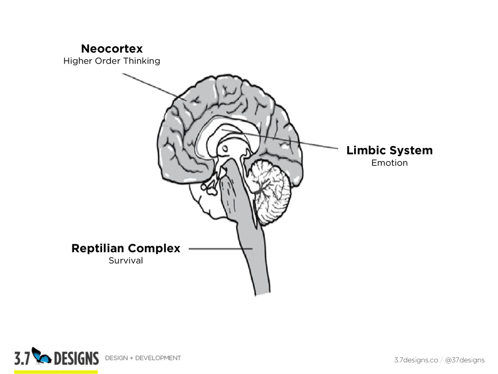 3.7designs.co / @37designs Neocortex Higher Ord...