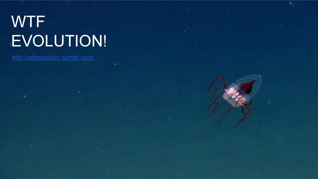 WTF EVOLUTION! http://wtfevolution.tumblr.com/