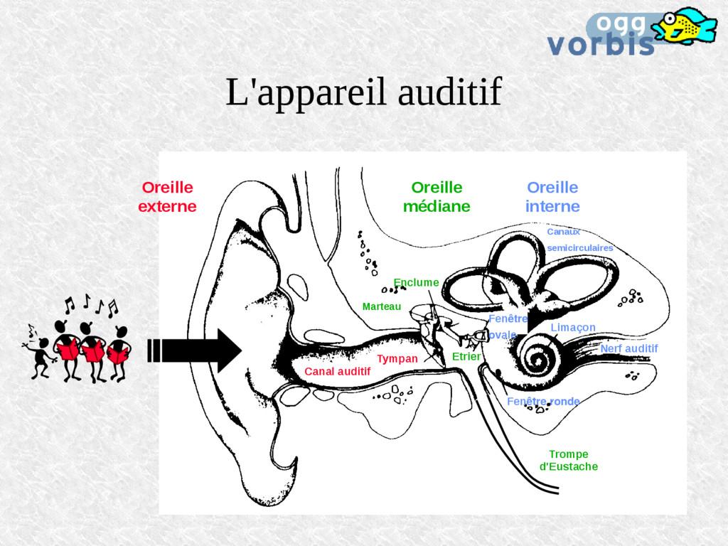 L'appareil auditif Canal auditif Marteau Tympan...