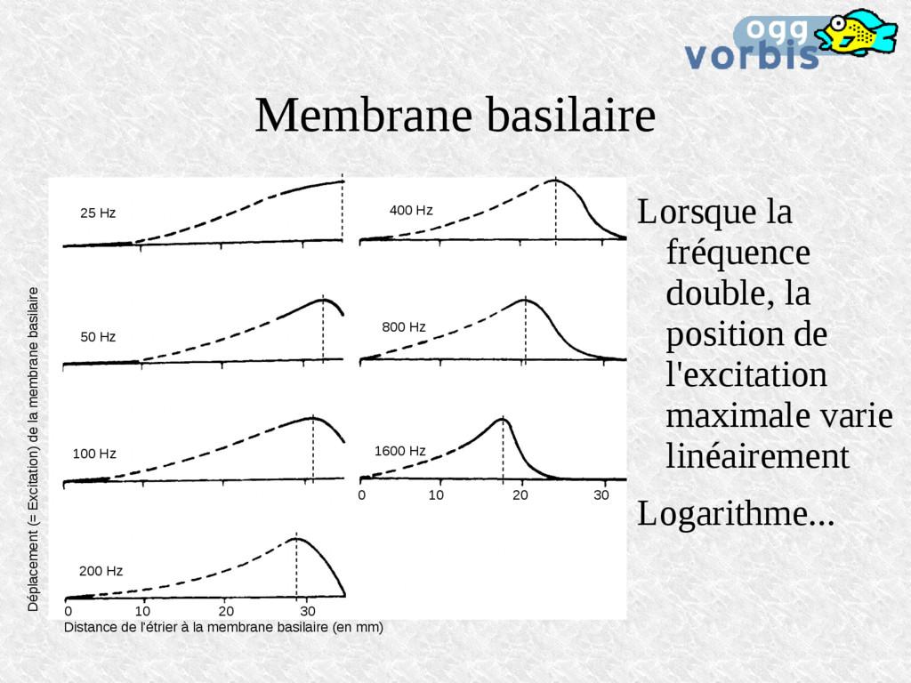 Membrane basilaire 25 Hz 50 Hz 100 Hz 200 Hz 40...