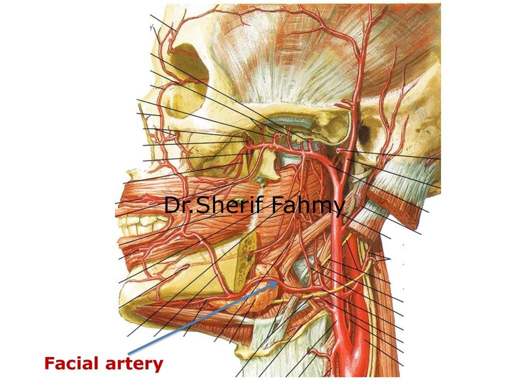 Facial artery Dr.Sherif Fahmy