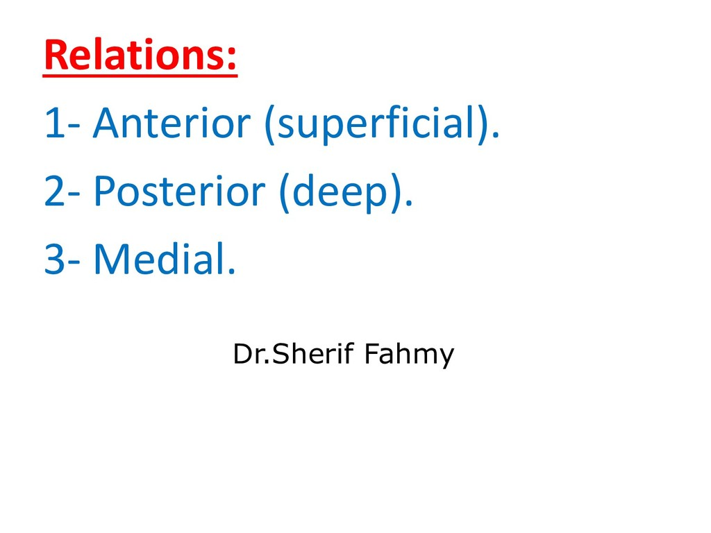 Relations: 1- Anterior (superficial). 2- Poster...