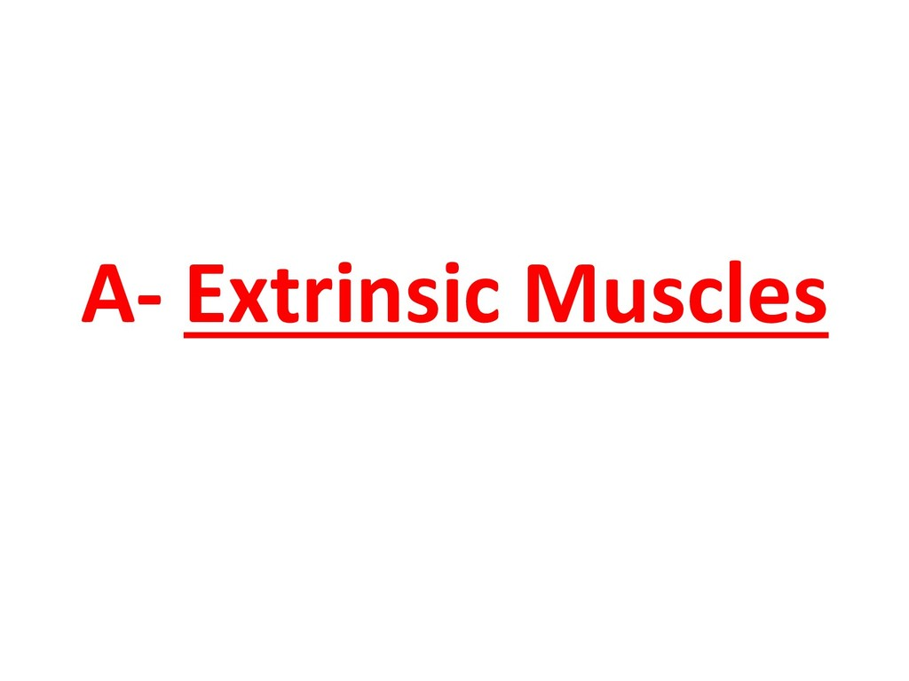 A- Extrinsic Muscles