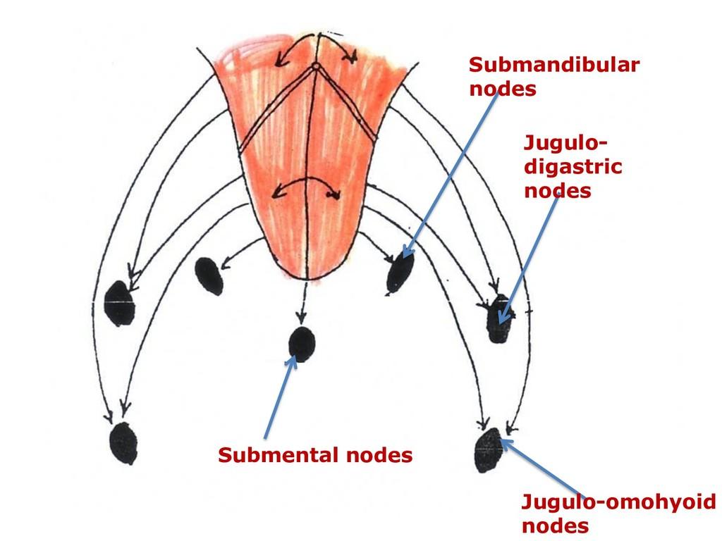 Submental nodes Submandibular nodes Jugulo- dig...