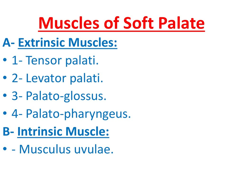 Muscles of Soft Palate A- Extrinsic Muscles: • ...