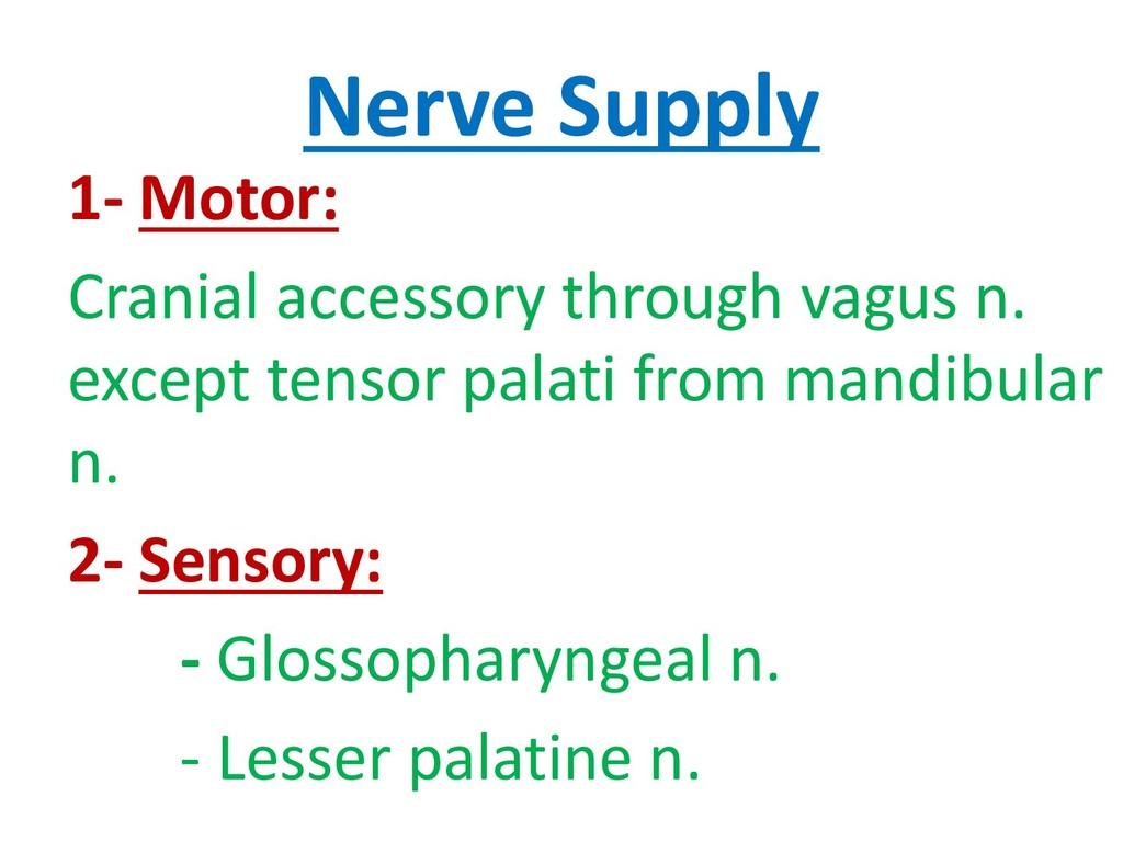Nerve Supply 1- Motor: Cranial accessory throug...