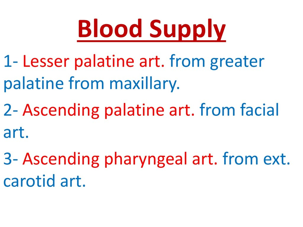 Blood Supply 1- Lesser palatine art. from great...