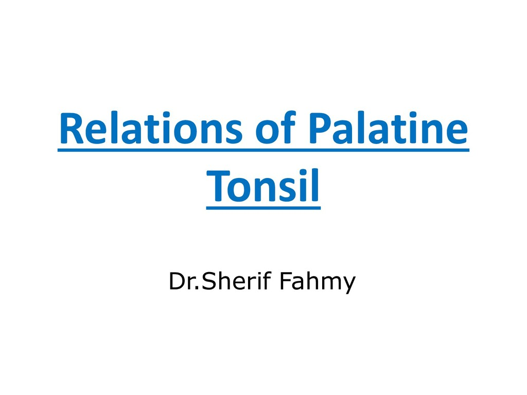 Relations of Palatine Tonsil Dr.Sherif Fahmy