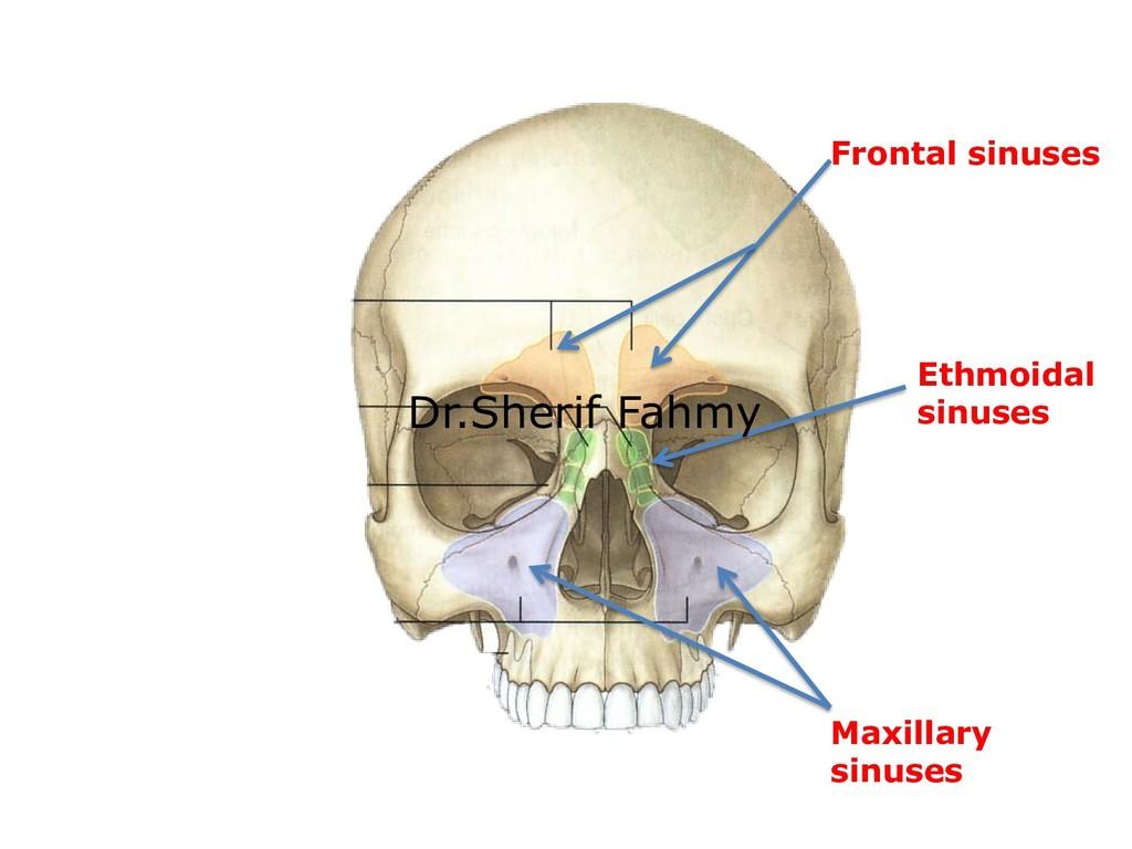 Frontal sinuses Ethmoidal sinuses Maxillary sin...