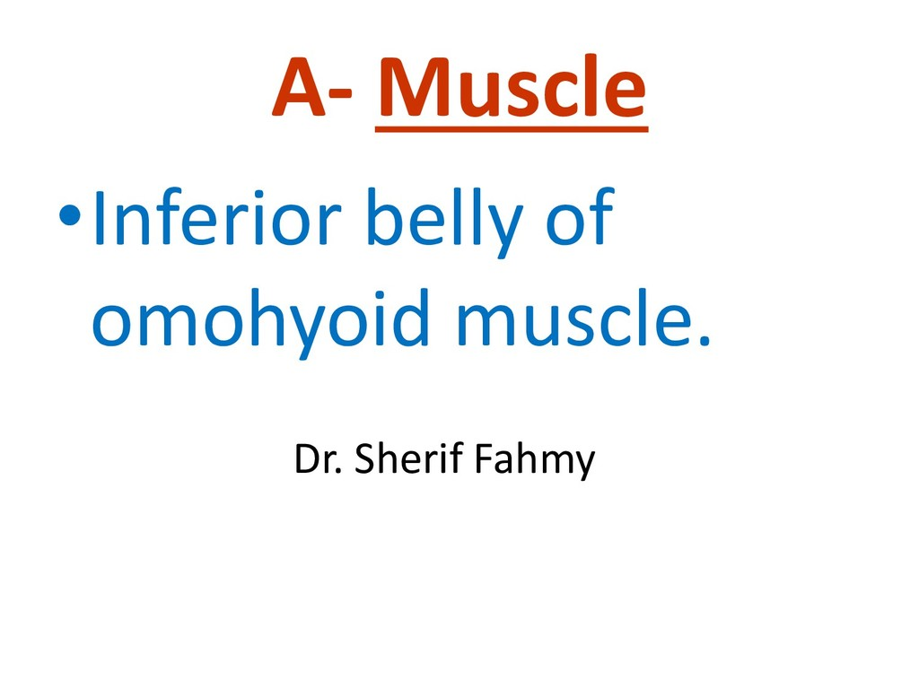 A- Muscle •Inferior belly of omohyoid muscle. D...