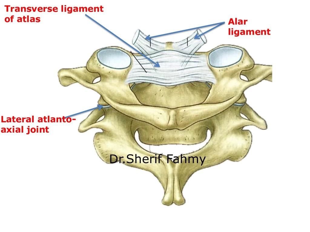 Transverse ligament of atlas Alar ligament Late...
