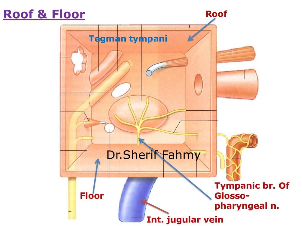 Roof Tegman tympani Floor Int. jugular vein Tym...