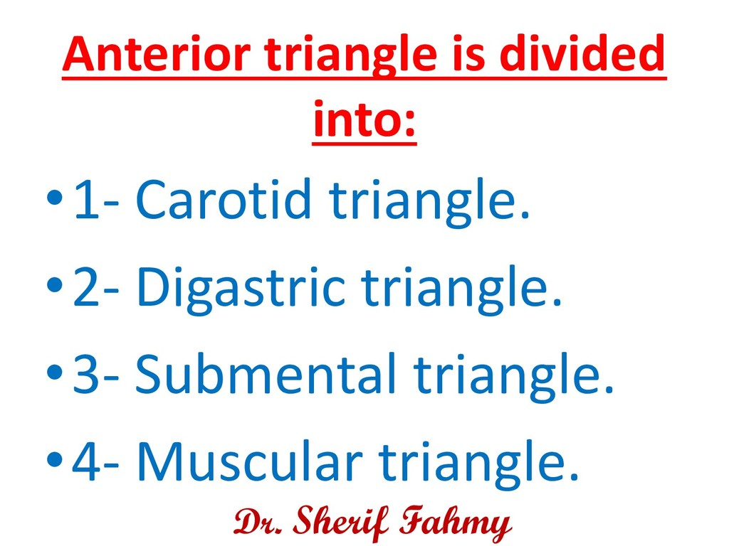 Anterior triangle is divided into: •1- Carotid ...