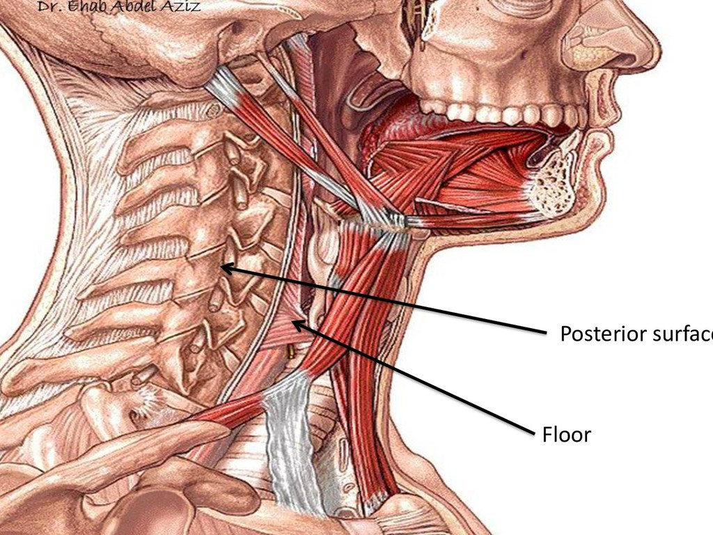Posterior surface Floor