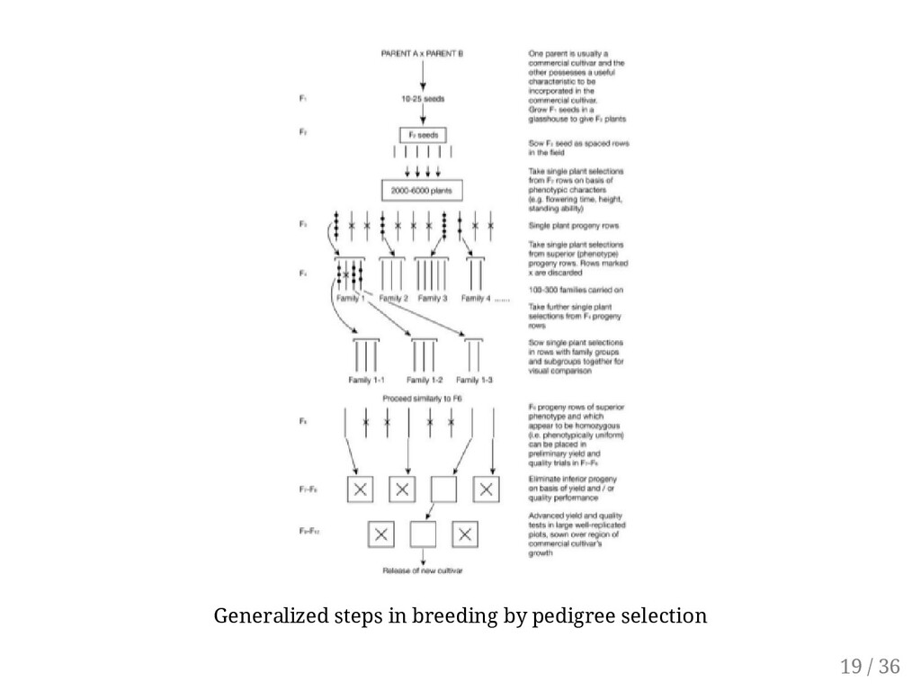 Generalized steps in breeding by pedigree selec...