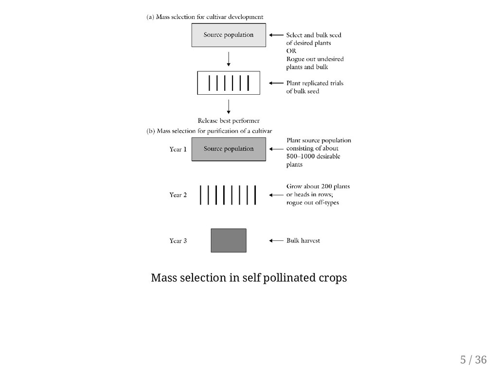 Mass selection in self pollinated crops 5 / 36